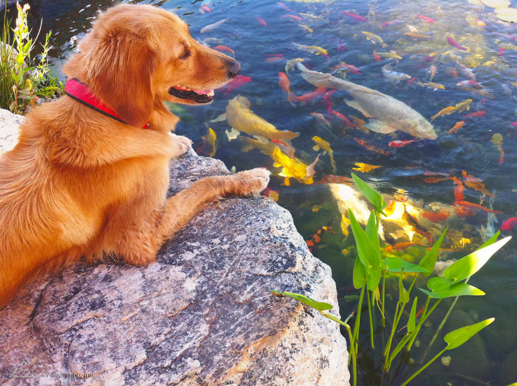 Your animals enjoy the fish and water in your pond